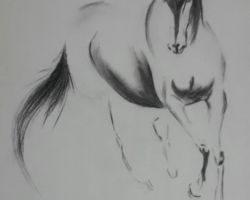 The horse - charcoal pencils - 2014